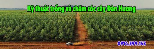 ky thuat cham soc dan huong