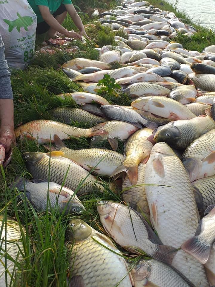 Bán đạm cá sử dụng cho sầu riêng và những loại cây ăn trái khác